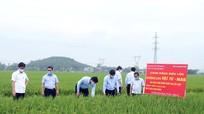 Thứ trưởng Bộ NN và PTNT kiểm tra sản xuất nông nghiệp tại Nghệ An