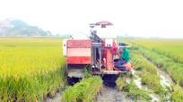 Nông dân vùng 'chạy lụt' ở Nghệ An gặt lúa xuân sớm