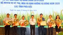 An toàn, hiệu quả phải là ưu tiên hàng đầu trong sản xuất hè thu - mùa 2020