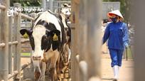 TH true MILK hoàn tất kế hoạch nhập khẩu đàn bò sữa cao sản 4.500 con