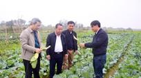 Nghệ An lên kế hoạch gieo trồng 35.545 ha vụ Đông năm 2021