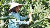 Nghệ An: 14 địa phương được hỗ trợ mua giống cây trồng vụ đông