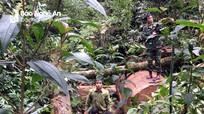 2 thanh niên Lào sang Nghệ An khai thác gỗ trái phép, dùng dao chống trả lực lượng chức năng