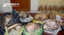 Bị bắt khi vận chuyển 7 cá thể tê tê ra bán tại Nghệ An