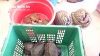 Bắt khẩn cấp đối tượng vận chuyển số lượng lớn tê tê, rùa quý hiếm