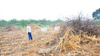Bài 1: Giống kém, hàng trăm hộ dân mất mùa