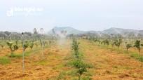 Bài 2: Loạn nguồn giống, thiếu cây đầu dòng