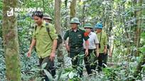 Nghệ An: Áp dụng Luật Lâm nghiệp mới, quản lý rừng bền vững