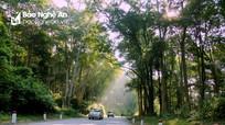 REDD+ nguồn lợi bền vững từ dịch vụ hệ sinh thái rừng