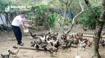 Kỳ vọng mới của nông dân Kỳ Sơn