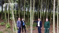 Ngân hàng CSXH Nghệ An: Tín hiệu tích cực từ nâng hạn mức cho vay