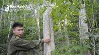 Tăng độ che phủ rừng, giảm phát thải khí nhà kính