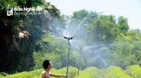 Trời nắng như đổ lửa, nông dân Nghệ An nỗ lực cứu cây chè