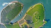 Ấn tượng đảo chè Thanh Chương với góc nhìn flycam