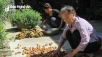 4.000 đồng/kg vải quả, người dân ngậm ngùi để hay chặt cây?