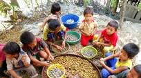 Trẻ em vùng cao bóc bo bo thuê phụ giúp gia đình