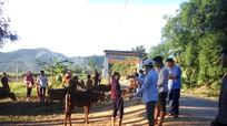 Trao 134 con bê giống sinh sản cho hộ nghèo ở Con Cuông.