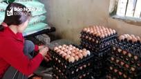 Giá trứng gia cầm giảm sâu, người chăn nuôi thua lỗ  