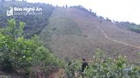 Hơn 10.000 ha đất lâm nghiệp ở Nghệ An bị chuyển nhượng trái phép và sử dụng sai mục đích
