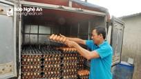 Giá trứng gia cầm giảm hơn 40%, người chăn nuôi thua lỗ
