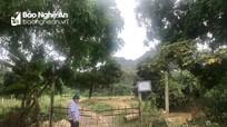 Thêm 2 huyện ở Nghệ An xuất hiện dịch tả lợn châu Phi