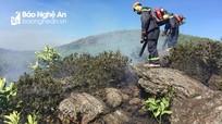 Nghệ An: Sau nhiều rừng thông, cả rừng keo, sim cũng bốc cháy