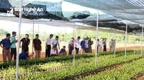 Huyện Con Cuông sẽ đưa vào trồng hơn 50 ha cây mắc ca