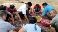 Sau bão số 4 cuốn nhiều ngao, sò dạt vào bờ, người dân Cửa Lò đổ xô vớt 'lộc biển'