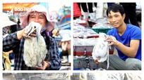 Ngư dân Nghệ An trúng đậm mực nang