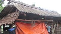 Nông dân vùng cao Nghệ An đốt lửa, chế biến thức ăn chống rét cho vật nuôi