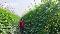 Những mô hình ứng dụng khoa học công nghệ trồng cây ăn quả đem lại kỳ vọng mới
