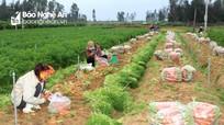 Rau xanh ở Nghệ An tăng giá sau dỡ lệnh cách ly xã hội