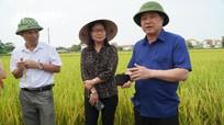 Thứ trưởng Bộ Nông nghiệp kiểm tra mô hình cánh đồng lớn tại Nghệ An