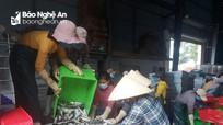 Nghệ An: Tàu thuyền nằm bờ tránh bão, hải sản tăng giá mạnh