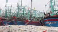 Ngư dân Nghệ An bội thu chuyến biển cuối năm