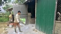 Dịch tả lợn châu Phi tái phát ở Đô Lương