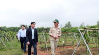 Chủ tịch UBND tỉnh thăm mô hình nông nghiệp thu nhập cao ở Đô Lương