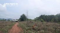 Giải trình trách nhiệm về những sai phạm tại các Ban quản lý rừng phòng hộ ở Nghệ An