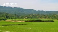 UBND tỉnh thu hồi hơn 28 ha đất của Lâm trường Cô Ba giao cho huyện Quỳ Châu