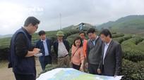 Các dự án nông nghiệp tại Nghệ An đạt nhiều kết quả tốt