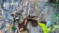 Hai người đàn ông treo mình lơ lửng trên vách núi để lấy tổ ong