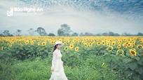Cánh đồng hoa hướng dương Nghệ An chính thức nở rộ