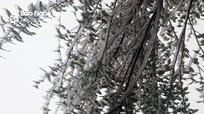 Nước đóng băng, cuộc sống người dân bị đảo lộn vì giá rét ở Kỳ Sơn