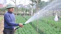 Nhà vườn ở Nghệ An tất bật vào vụ hoa Tết