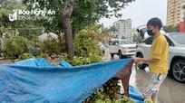 Nghệ An: Người buôn đào quất 'khóc ròng' vì cơn mưa cuối năm
