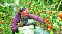 Nghệ An: Rau xanh 'nhích' giá chậm, người dân sản xuất cầm chừng