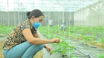 Nông dân Nghệ An đa dạng cây trồng nhà lưới