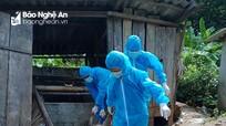 Huyện miền núi Nghệ An tiêu hủy hàng tấn lợn do dịch tả lợn châu Phi