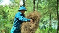 Nhiều cánh rừng thực bì dày cộm, nguy cơ cháy tăng cao