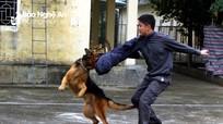Một ngày ở trung tâm huấn luyện chó nghiệp vụ